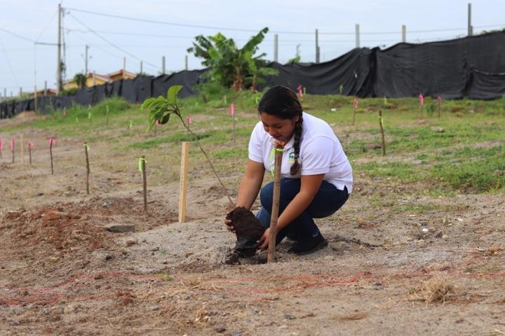 reforestacion-prococle_7204