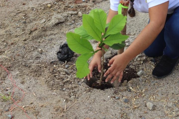 reforestacion-prococle_7205