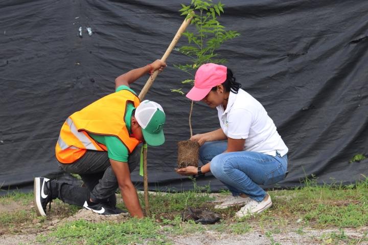 reforestacion-prococle_7221