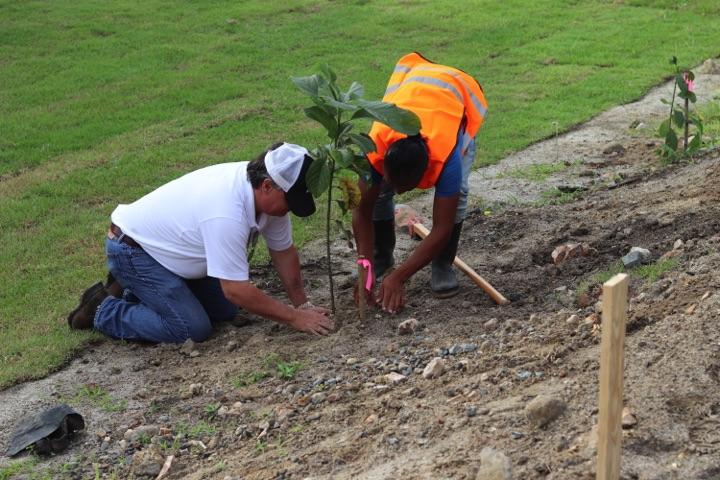 reforestacion-prococle_7236