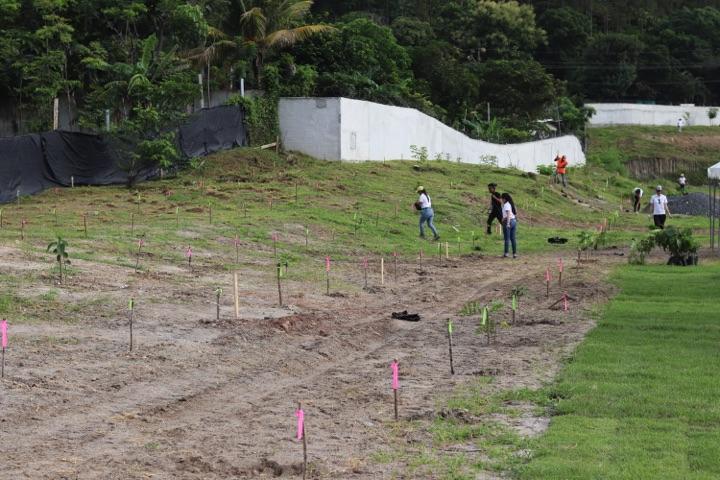 reforestacion-prococle_7247