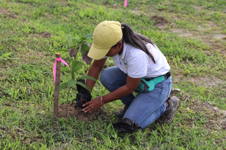 reforestacion-prococle_7252